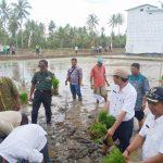 Tanam padi 1000 hektar di Kalsel